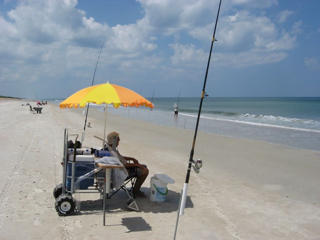 surf fishing pictures posters news and videos on your