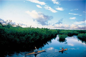 Kayaking the mangrove trail at Curry Hammock State Park