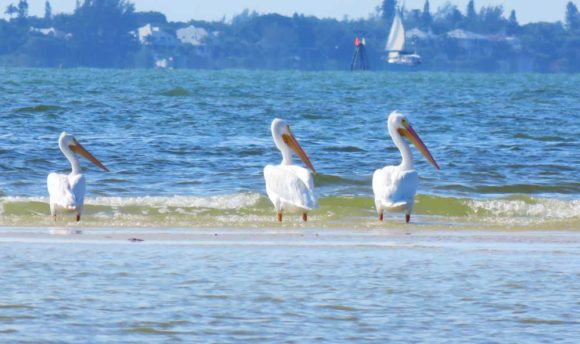 Fort Myers Bunche Beach: Heaven for birders, kayakers