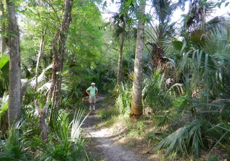 Hiking trail at Hontoon Island State Park