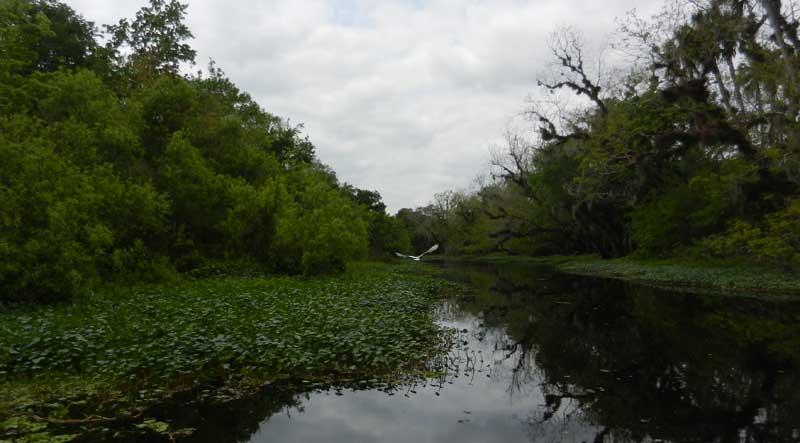 Snake Creek at Hontoon Island State Park