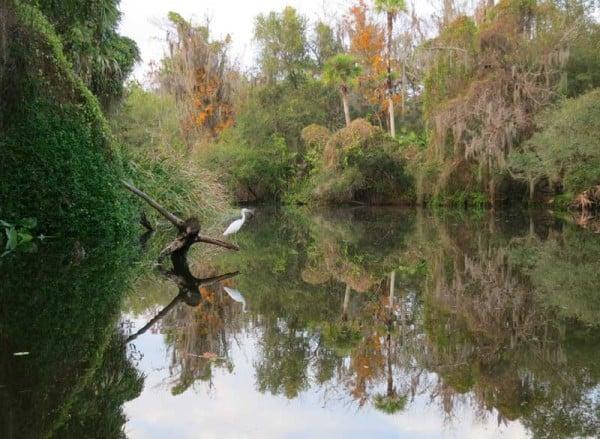Shell Creek Punta Gorda