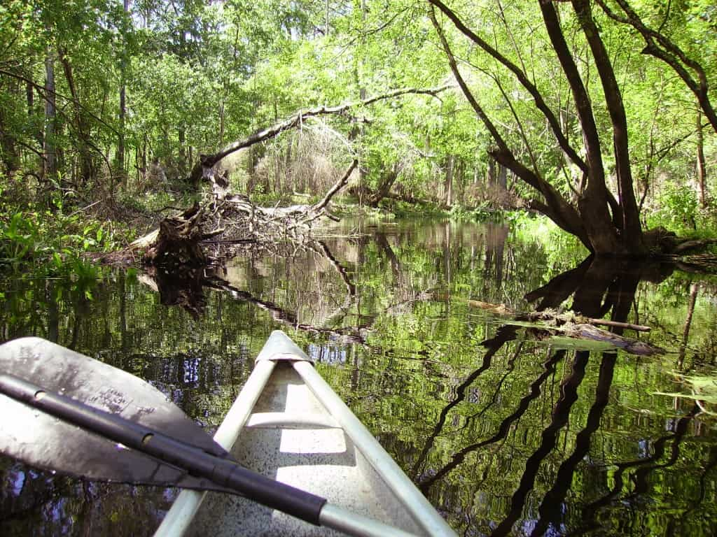 Florida canoe trails and kayaking: The Withlacoochee River is among Florida's most scenice paddles.