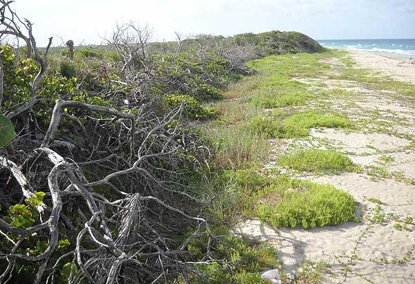 John D. MacArthur Beach State Park, North Palm Beach, Florida