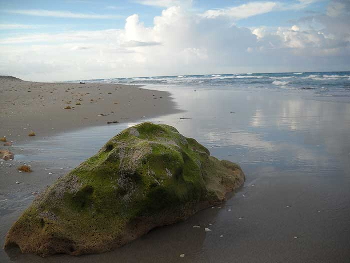 John D. MacArthur Beach State Park and its rocky shoreline