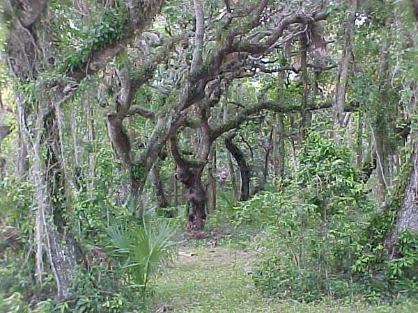 The Hammock Trail at Sebastian Inlet State Park