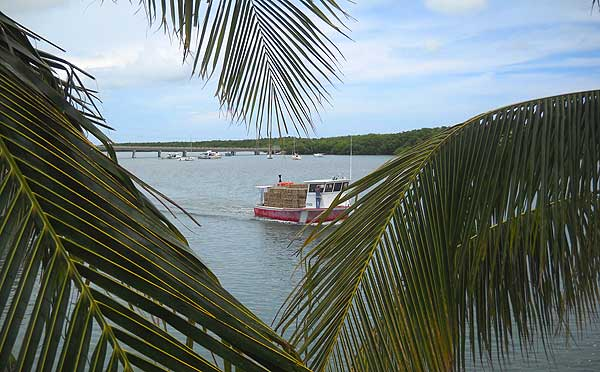 Florida Keys: Lobster boats go to sea, view from the Chiki Tiki at Burdines Marina