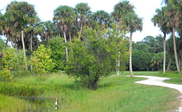 Trail in Riverbend Park, Jupiter, Florida