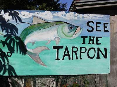 Sign at Robbie's Marina, where you feed the tarpon. (Photo: Bonnie Gross)