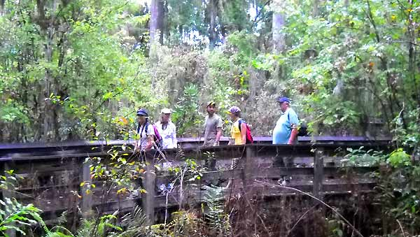 Florida hike: Barley Barber Swamp boardwalk
