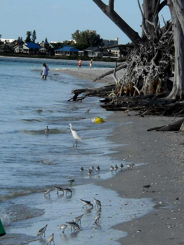Lovers Key, Fort Myers bech attracts birds