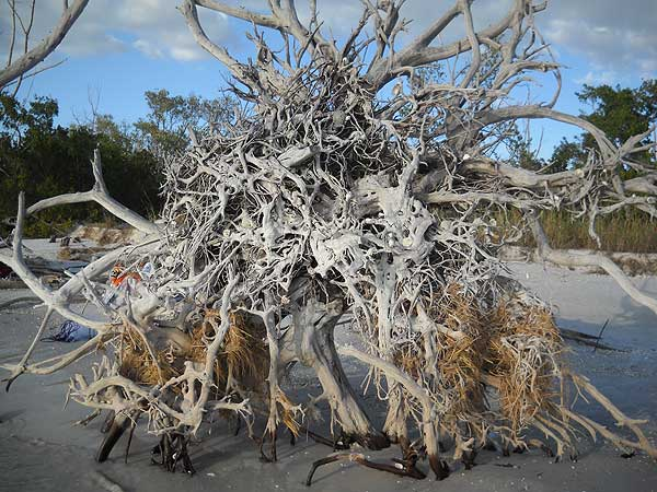 Lovers Key State Park driftwood