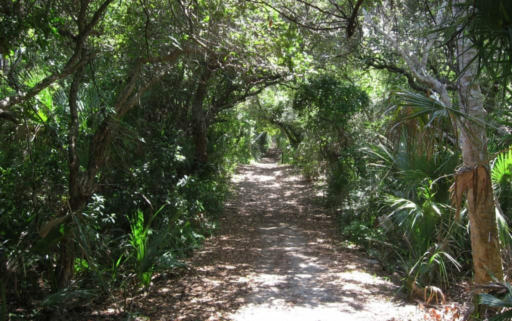 "Entrance ""tunnel"" to the Castle Windy Trail at Canaveral National Seashore"