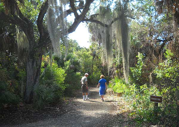 Trails on the eastern side of Cayo Costa State Park are shaded by oaks. (Photo: Bonnie Gross)