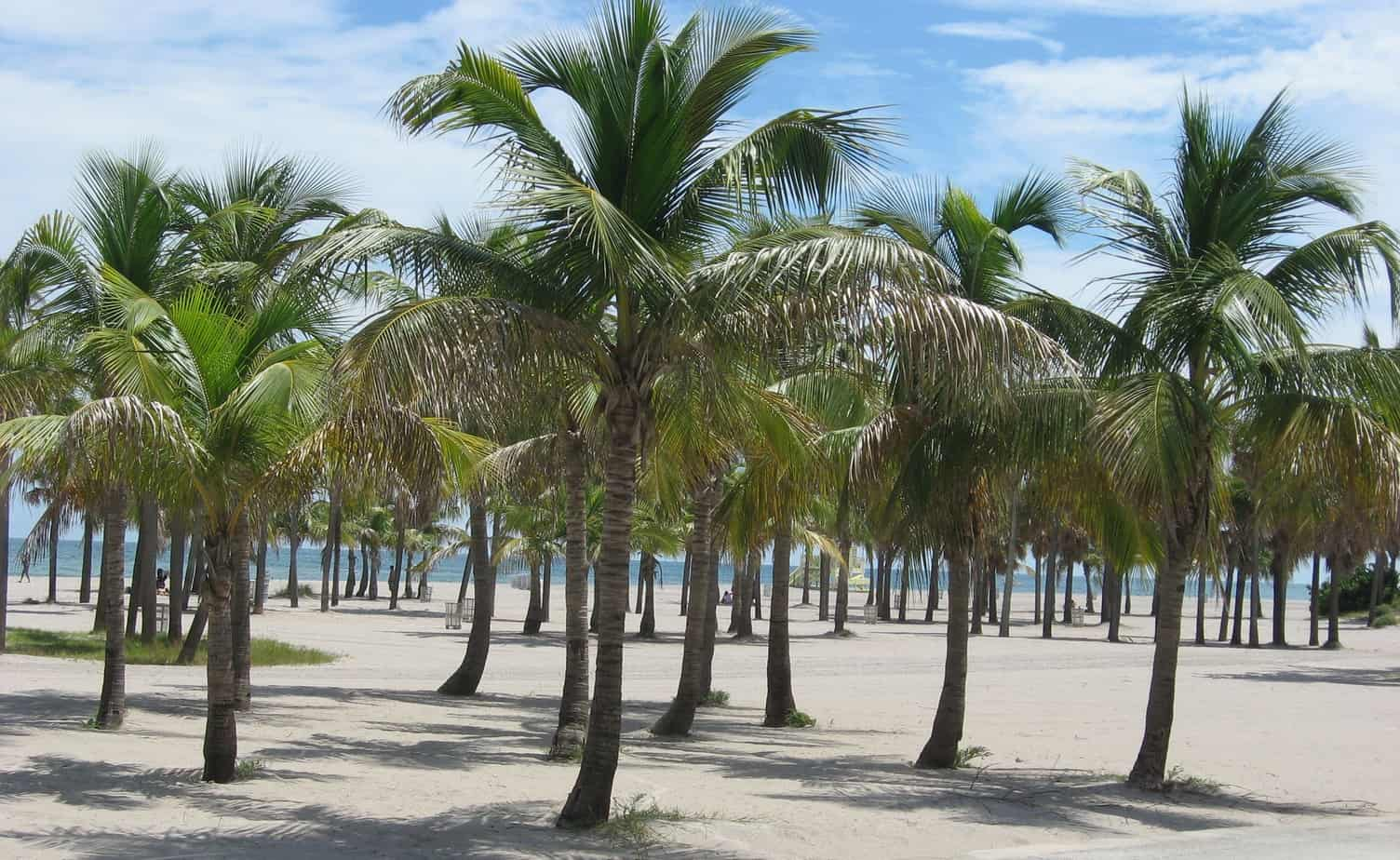 Crandon Park Beach is a secret to all but Miamians