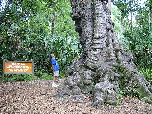 The big oak at Highland Hammocks State Park along the Florida Cracker Trail. (Photo: Bonnie Gross)