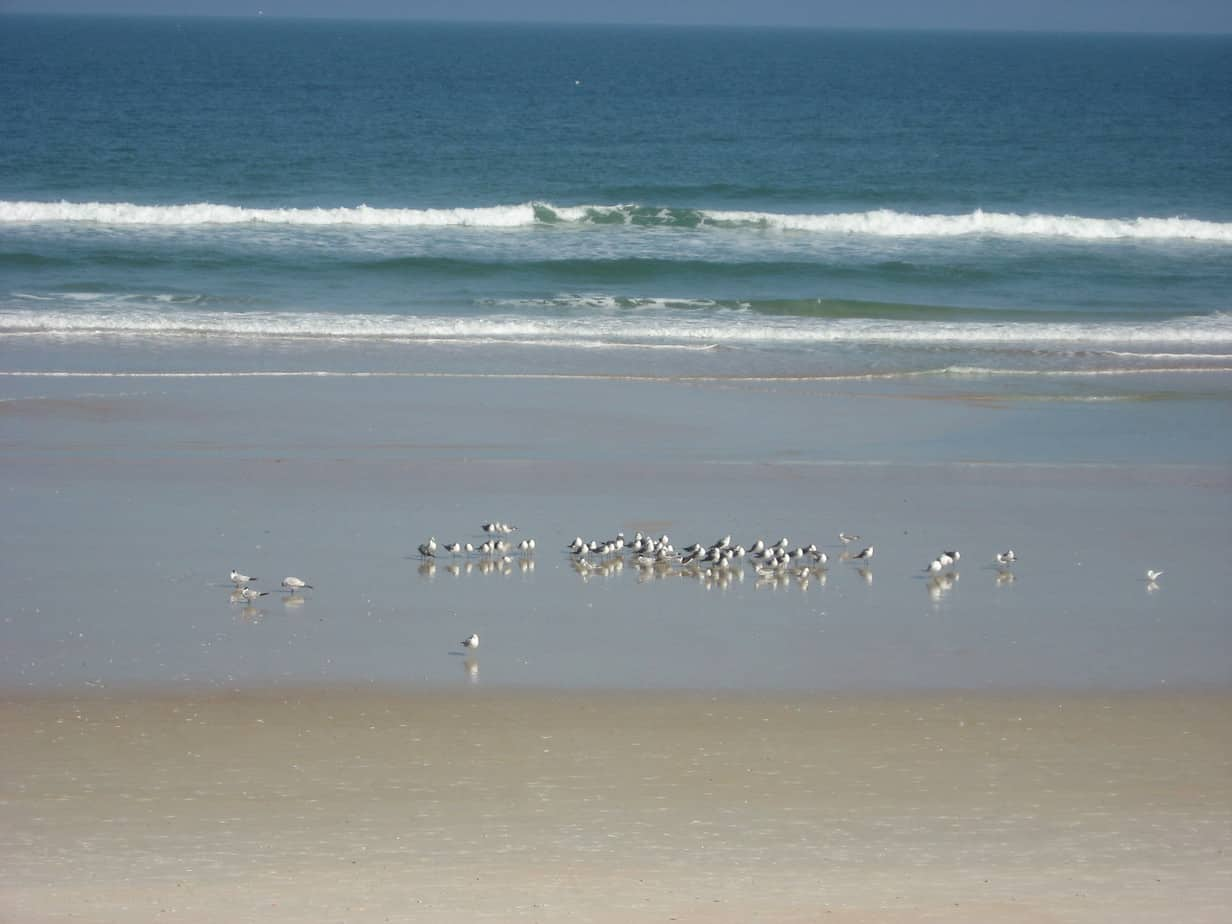 Shore birds prowl for chow at low tide.