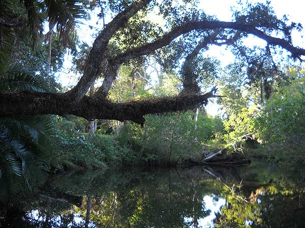 Scenic Estero riverfront at Koreshan State Park