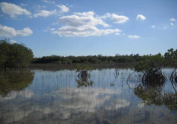 The sky reflected along Everglades National Park Nine Mile Pond canoe trail