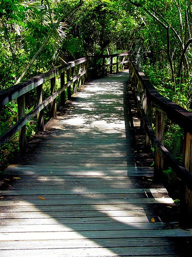 Tamiami Trail Big Cypress Bend Boardwalk (Photo :dchriso via flickr)