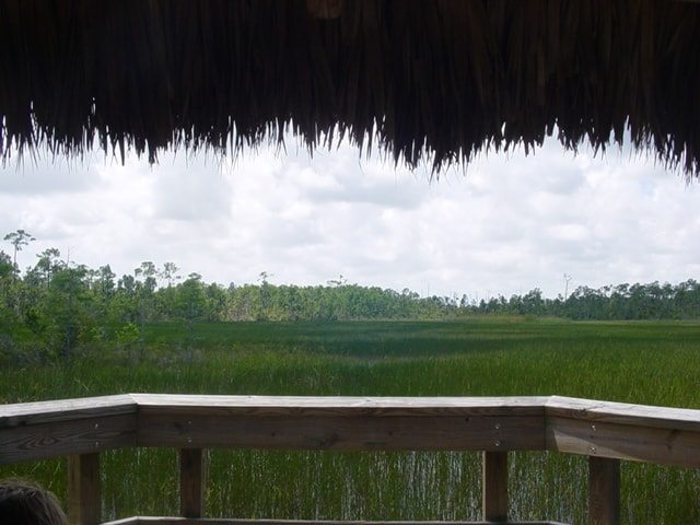 View from chickee hut at Grassy Waters Preserve.
