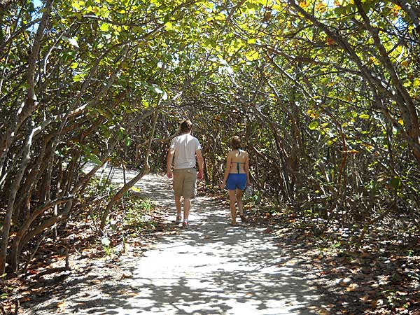You wind through a tunnel of seagrape trees on the short trail to Blowing Rocks Preserve beach