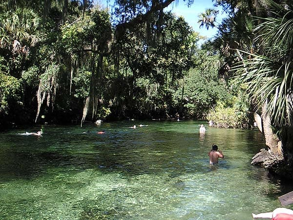 Swimmers at Blue Spring