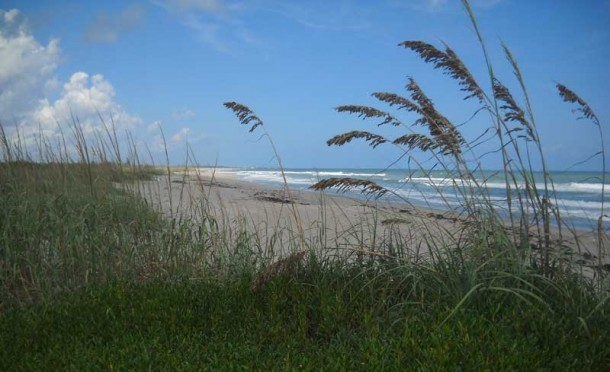 Sea oats line five miles of wild beach at Hobe Sound National Wildlife Refuge, a quiet beach in Florida that I discovered on a bike ride. (Photo: Bonnie Gross)