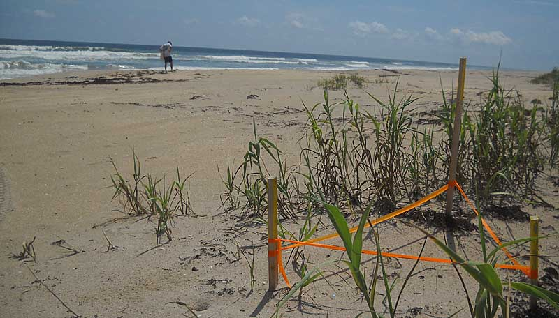 There were more turtle nests than people on the Hobe Sound National Wildlife Refuge. (Photo: Bonnie Gross)<