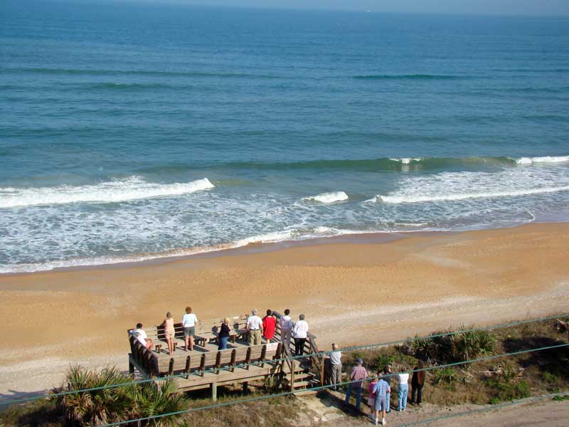 Right whale sighting off Flagler Beach