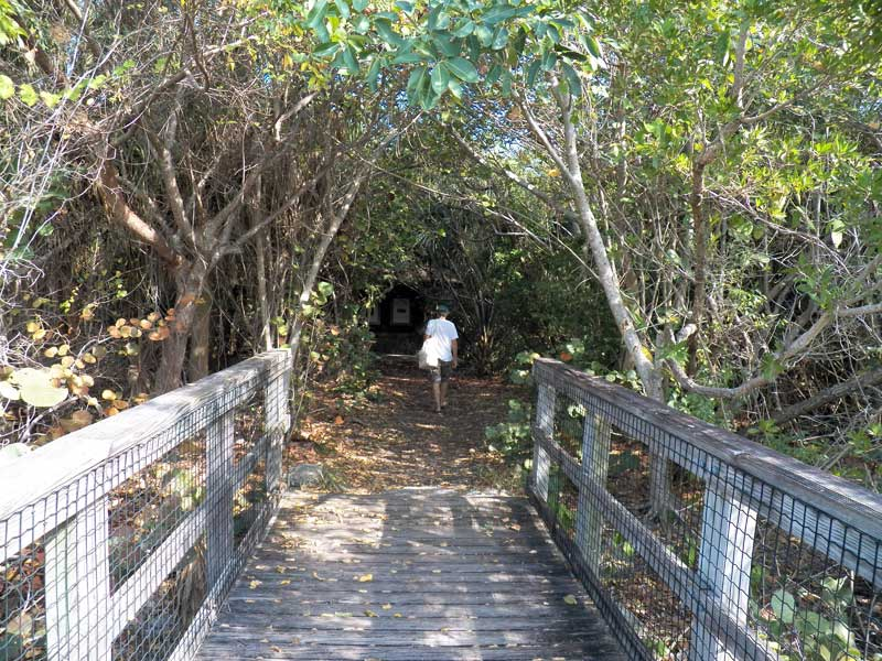Trail on Munyon Island, MacArthur Beach State Park