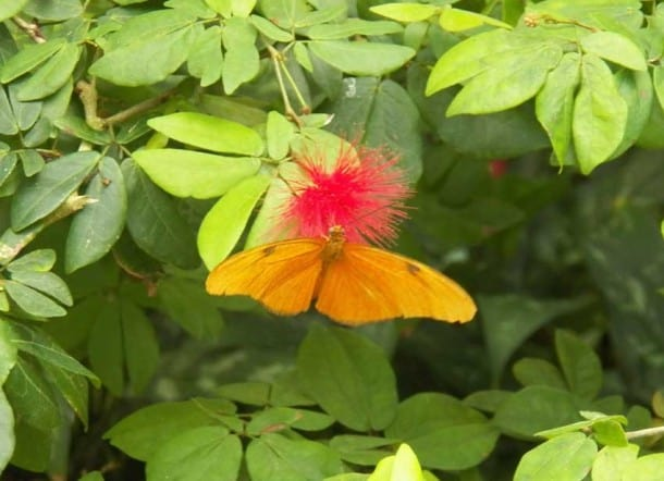 Key West Butterfly and Nature Conservancy