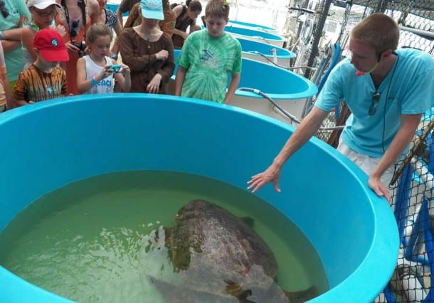 Visitors gather around a tank at the Turtle Hospital in the Florida Keys