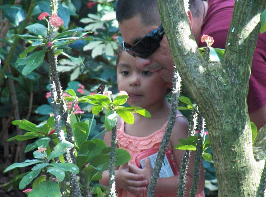 Key West butterfly garden and child