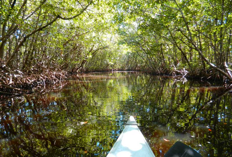 Kayak trail at Collier-Seminole State Park near Naples