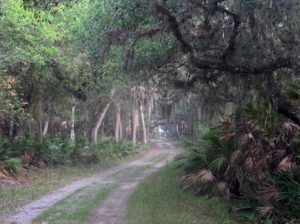 Ranch House Road at Myakka River State Park