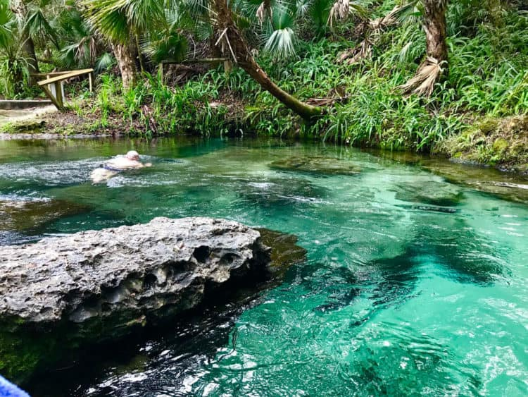 Nature parks in Orlando: Swimmer explores Rock Springs Run at Kelly Park. (Photo by Bonnie Gross)