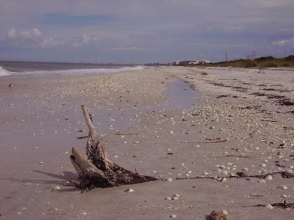 Shells on Barefoot Beach. (Photo: Bonnie Gross)