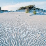 Dunes at Florida's Grayton Beach State Park