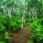 tom palmettojungle marioperalta Tomoka State Park: Gateway to the Ormond Scenic Loop