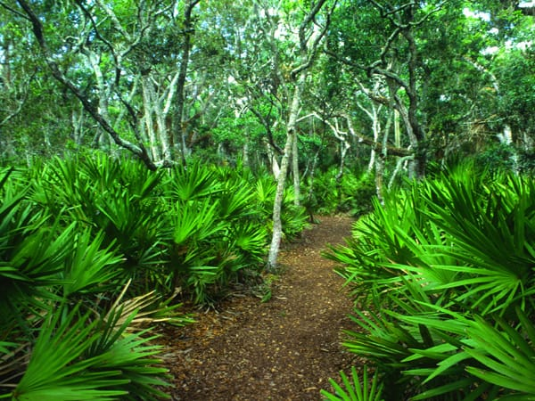 tom palmettojungle marioperalta Tomoka State Park: Gateway to the Ormond Scenic Loop