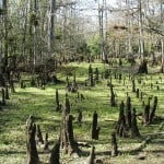 manatee springs kneesonthetrail stormywescoat Coming to Florida in your RV? Take a break after crossing the state line