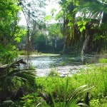silver river charleneknight Coming to Florida in your RV? Take a break after crossing the state line