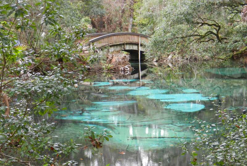 Juniper Springs is a diamond among jewels of Ocala kayaking. (Photo: Bonnie Gross)