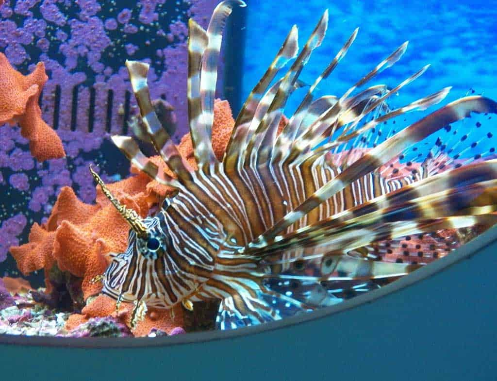 Lion fish. Florida Keys Eco-Discovery Center is one of the best things to do for free in Key West.