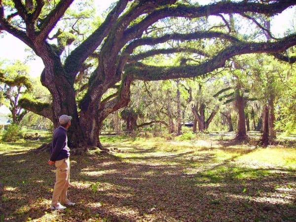 Ancient oaks arch over the Dade Battlefield Park.
