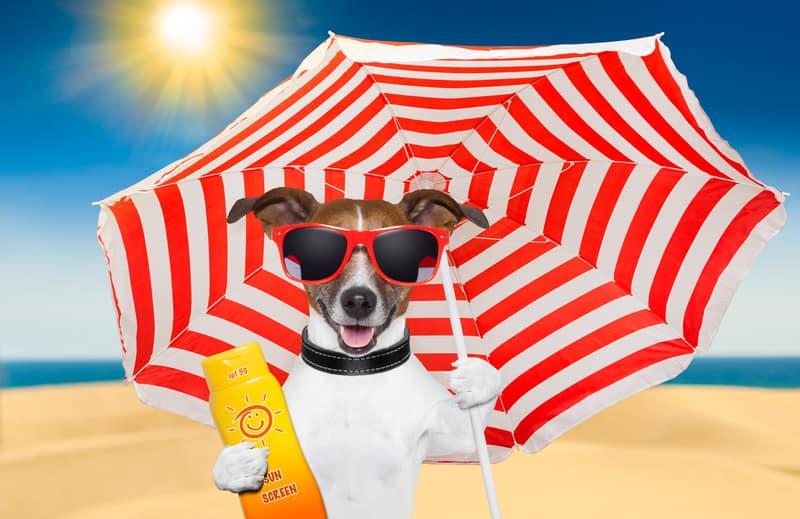 dog beach © Can Stock Photo / damedeeso