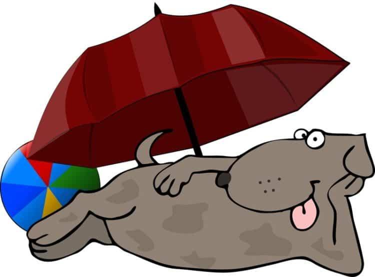 dog beaches in florida illustration
