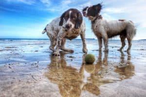 dogs at beach Swim, Spot, Swim! Dog beaches in Florida