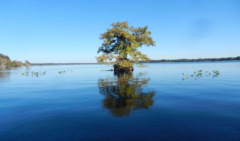 norris lake lone tree Kayaking Blackwater Creek  & Lake Norris: Splendid waterways to discover